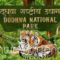 Lakhimpur - Dudhwa National Park