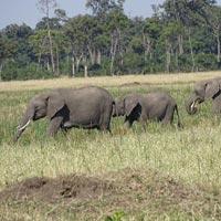 Maasai Mara - Nakuru - Nairobi