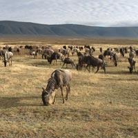 Arusha - Manyara - Serengeti - Ngorongoro - Arusha