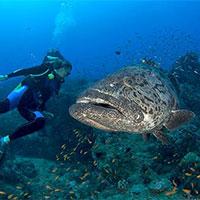 Port Blair - Coral Island - Havelock Island