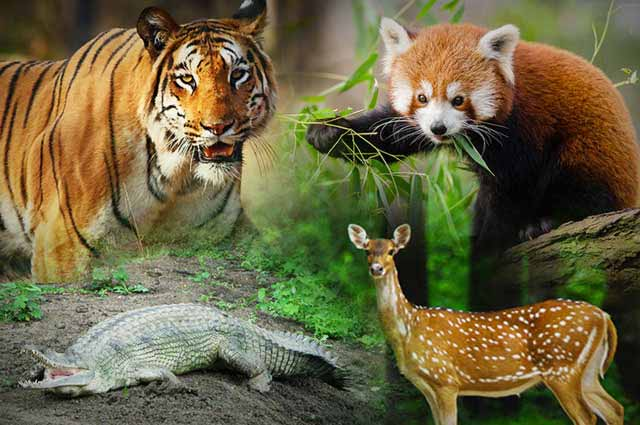 50 Wildlife Sanctuaries In India