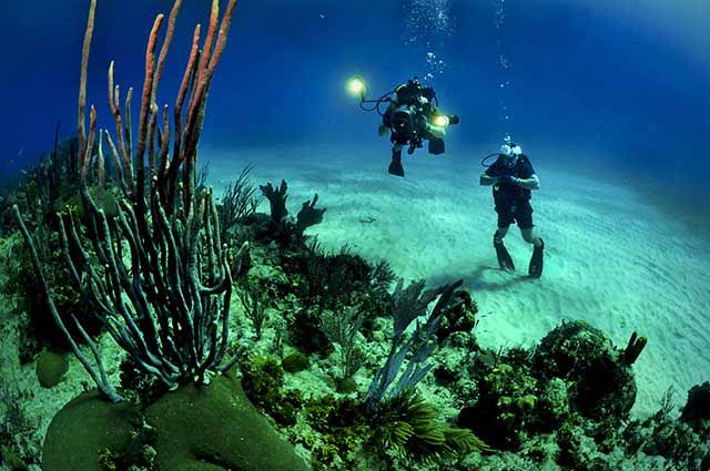 Scuba Diving is a perfect recreational activity in Andman