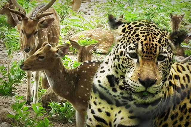 A Small Tour Of Nehru Zoological Park Hyderabad