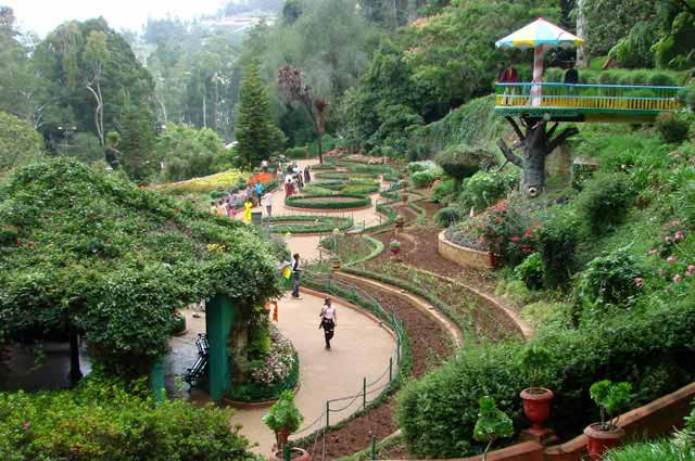 Botanical Gardens is the most popular place in Ooty