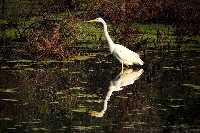 Keoladeo Bird Sanctuary is one of the most popular wildlife sanctuary in all over India