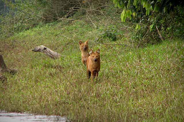 Periyar National Park is one of the most popular places to visit in Thekkady