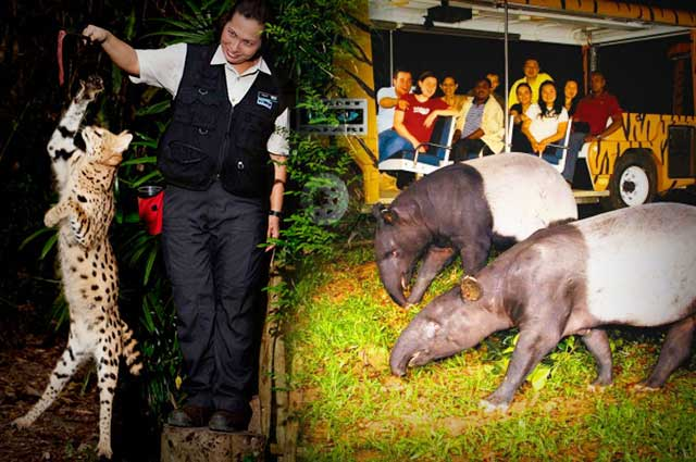 Singapore Night Safari- An Experience In Itself
