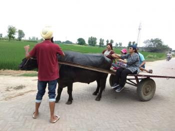 Buffalo cart.... Enjoy in village Punjab.
