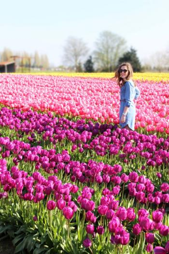 Tulip 🌷  Garden Kashmir