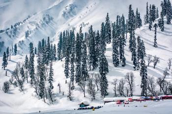 Kashmir woods winter look