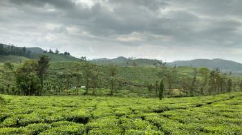Munnar - the ethtreal beauty of Kerala