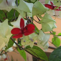Abraham's Spice Gardens in Thekkady