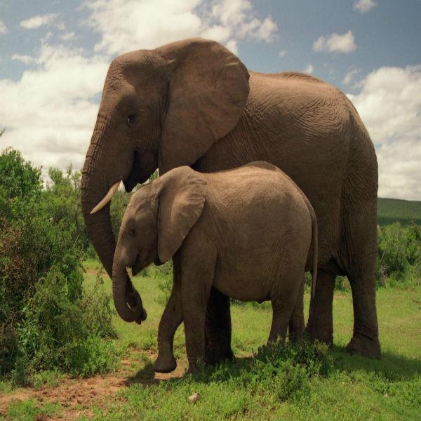 Addo Elephant National Park in Port Elizabeth