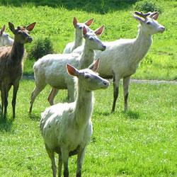 Alisagar Deer Park in Nizamabad