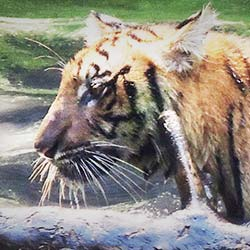 Allen Forest Zoo in Kanpur