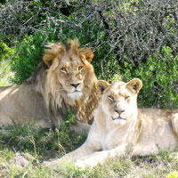 Amakhala Game Reserve in Eastern Cape