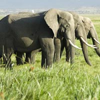 Amboseli National Park in
