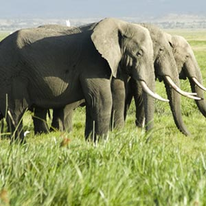 Amboseli National Park in Nairobi