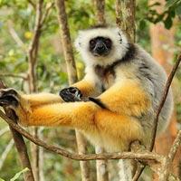 Andasibe-Mantadia National Park in Northeast Madagascar