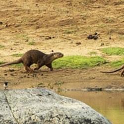 Anerdam Wildlife Sanctuary in Amarvati