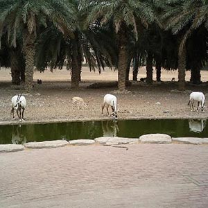 Arabian Wildlife Center  in Sharjah