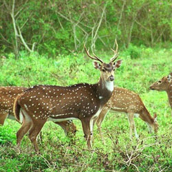 Askot Wildlife Sanctuary in Kumaon