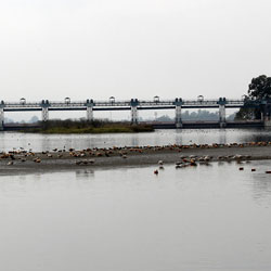 Assan Barrage Bird Sanctuary in Dehradun