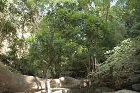 Bafing National Park in Southern Mali