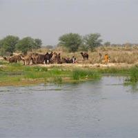 Banas River in Sawai Madhopur