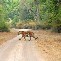 Bandhavgarh National Park in Umaria