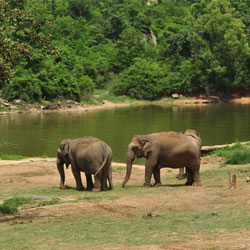 Bannerghatta National Park in Bangalore