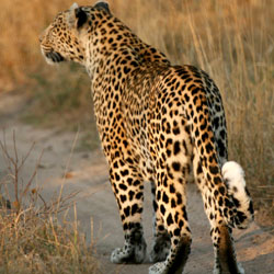 Barda Wildlife Sanctuary in Porbandar