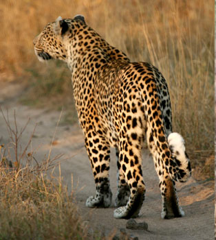 Barda Wildlife Sanctuary
