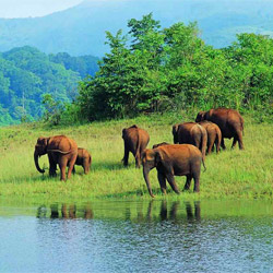 Begur Wildlife Sanctuary in Wayanad