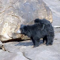Bellary Zoo in Bellary
