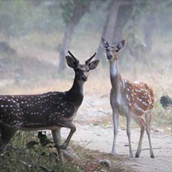 Benog Wildlife Sanctuary in Mussoorie