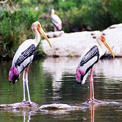 Bharatpur Bird Sanctuary in Bharatpur