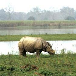 Bherjan-Borjan-Padumoni Wildlife Sanctuary in Tinsukia