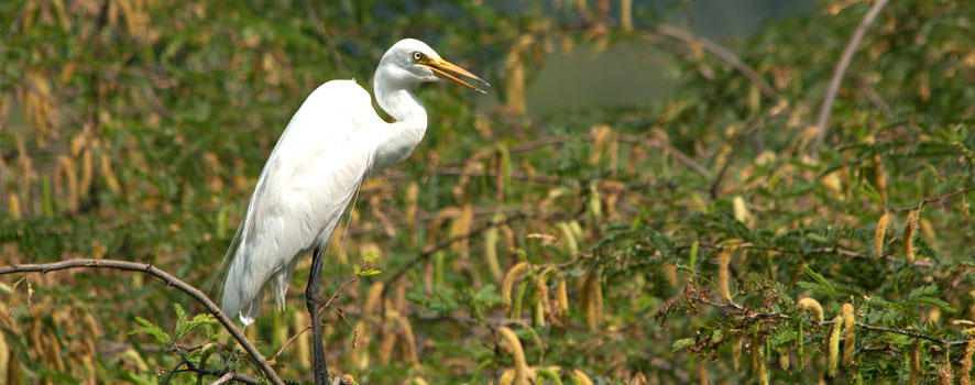 Bhindawas Bird Sanctuary