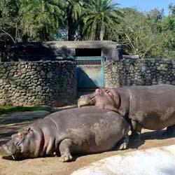 Bir Talab Zoo in Bhatinda