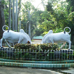 Botanical Gardens in Pondicherry