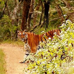 BR Hills Wildlife Sanctuary in Kemmannagundi