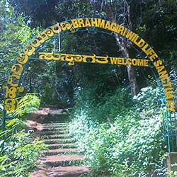 Brahmagiri Wildlife Sanctuary in Kodagu