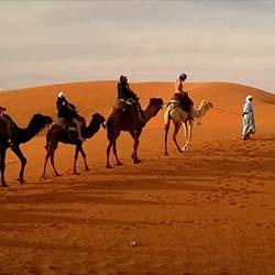 Camel Safari In Shekhawati in Shekhawati