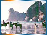 Cape Farewell Horse Treks in Nelson