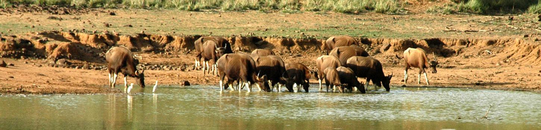 Chaprala Wildlife Sanctuary