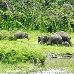 Chapramari Wildlife Sanctuary in Darjeeling