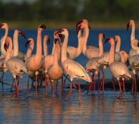 Chelmsford Nature Reserve, KwaZulu Natal in Kwazulu Natal