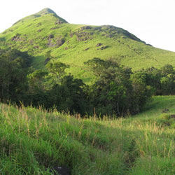 Mountain Trekking in Chembra Peak in Wayanad