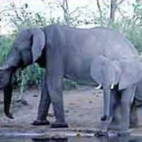 Chobe National Park in Chobe